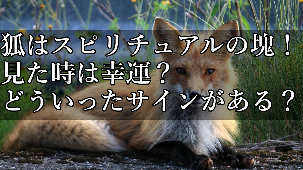 こちらを見つめる狐