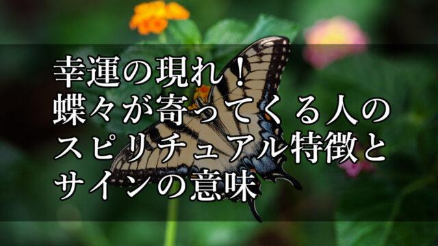 アゲハ蝶が寄ってくる人